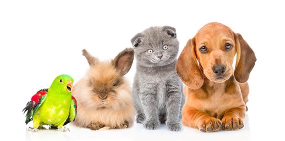 Alpstein Drogerie Tiergtesundheit