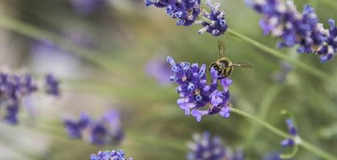 Alpstein Drogerie BeeFamily Honig